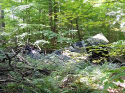 Lost Pond trail