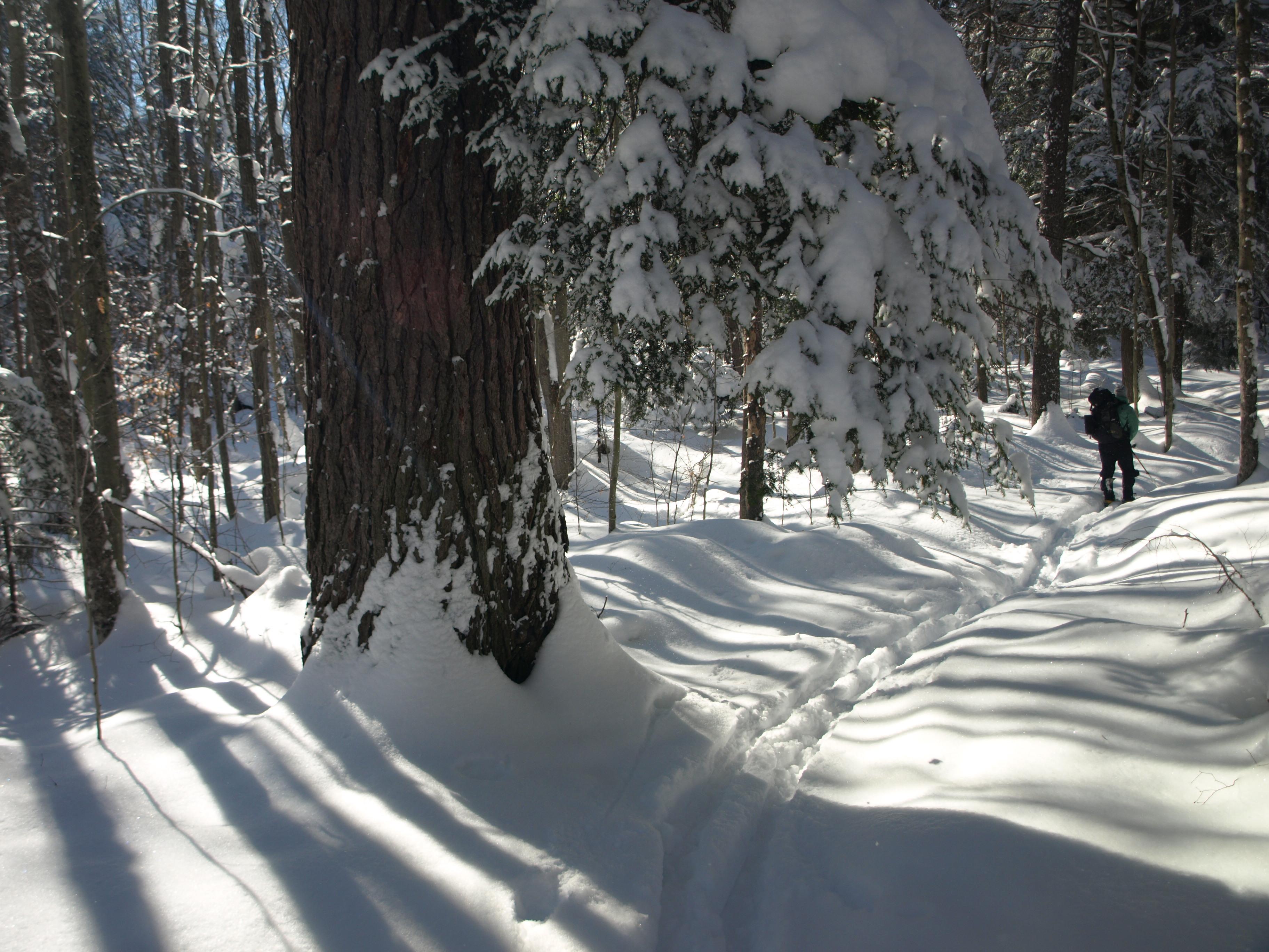 Peavine Swamp Trail Winter
