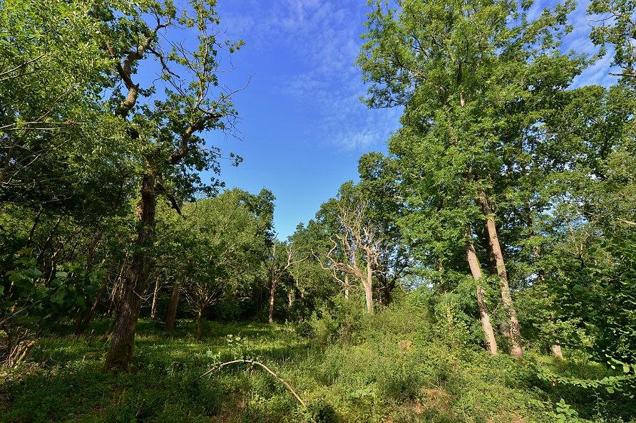 Pamber Forest (1024x682).jpg