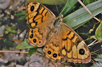 Wall Brown for Kevin Photo File.jpg