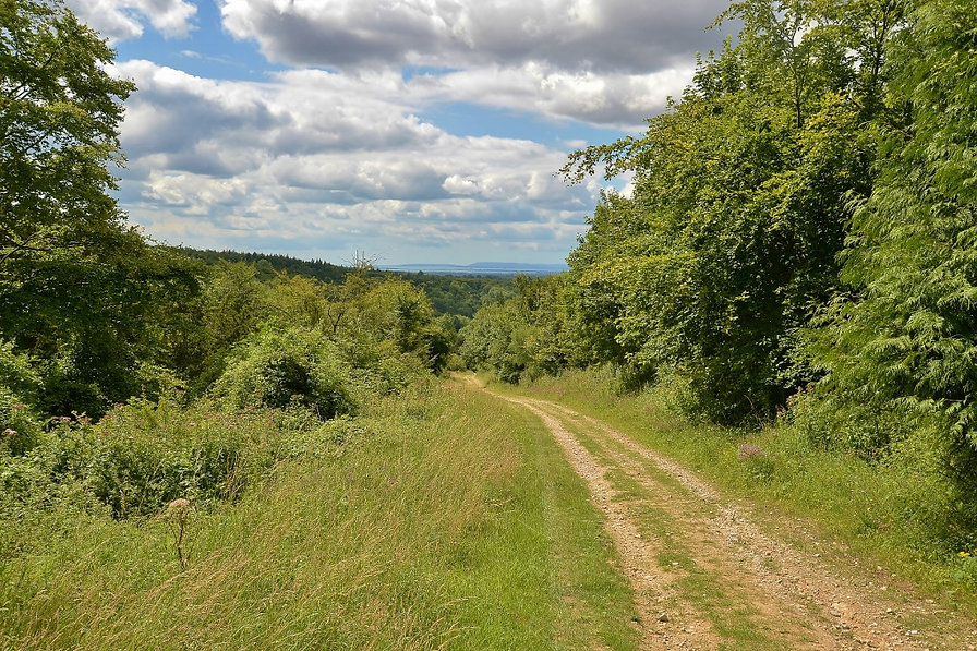West Harting Down July 2015.jpg