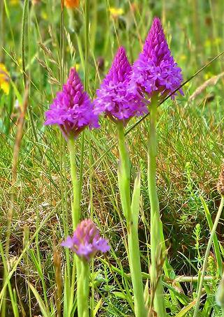 Orchids Nikki Kownacki.jpg