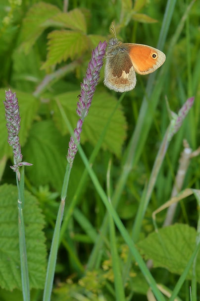 Small Heath OWH June 2015.jpg