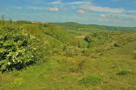 West Butser Hill May 2015.jpg