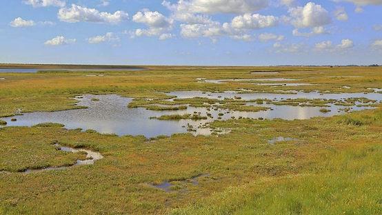 farlington marshes 2.jpg