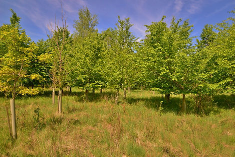 Area with smaller plantation with rough