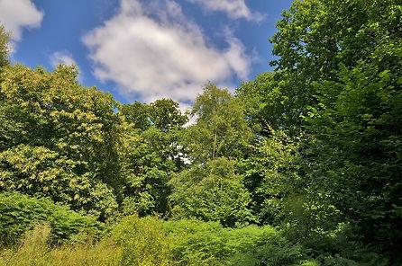 Southleigh Forest Highpoint 2014.jpg