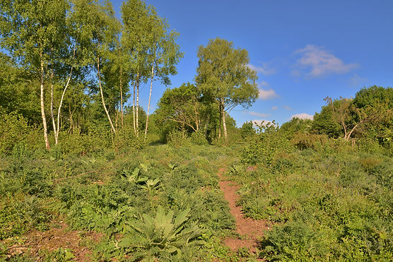Recently coppiced woodland on Stockbridg