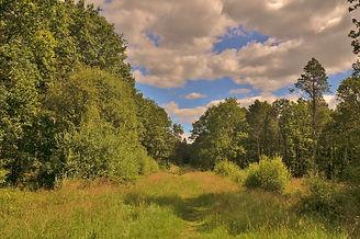 Whiteley Pastures.JPG