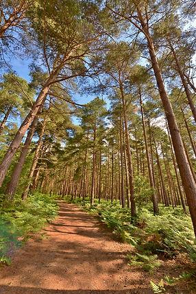 Roydon Woods June 2015.jpg