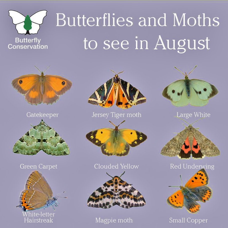 What to see in August Butterflies.jpg