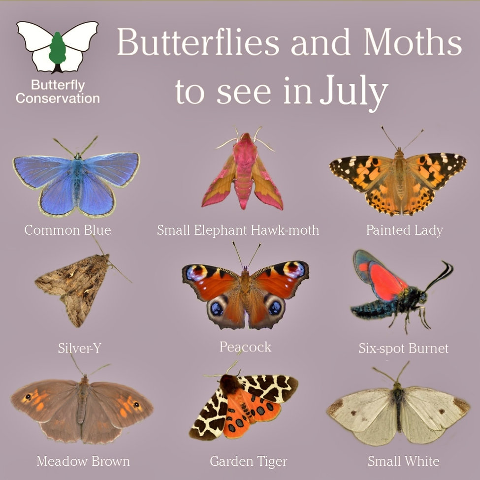 What Butterflies to see in July (2).jpg