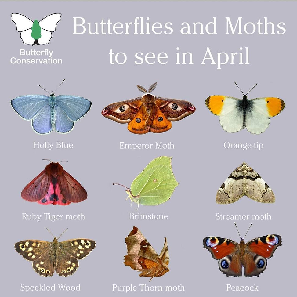 What to see in April Butterflt conservat