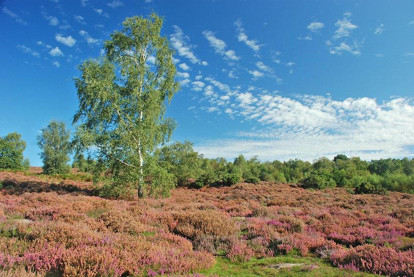 Broxhead Common.jpg
