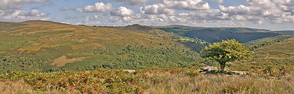a-view-across-dartmoor-from-combestone-tor Aish Tor.jpg