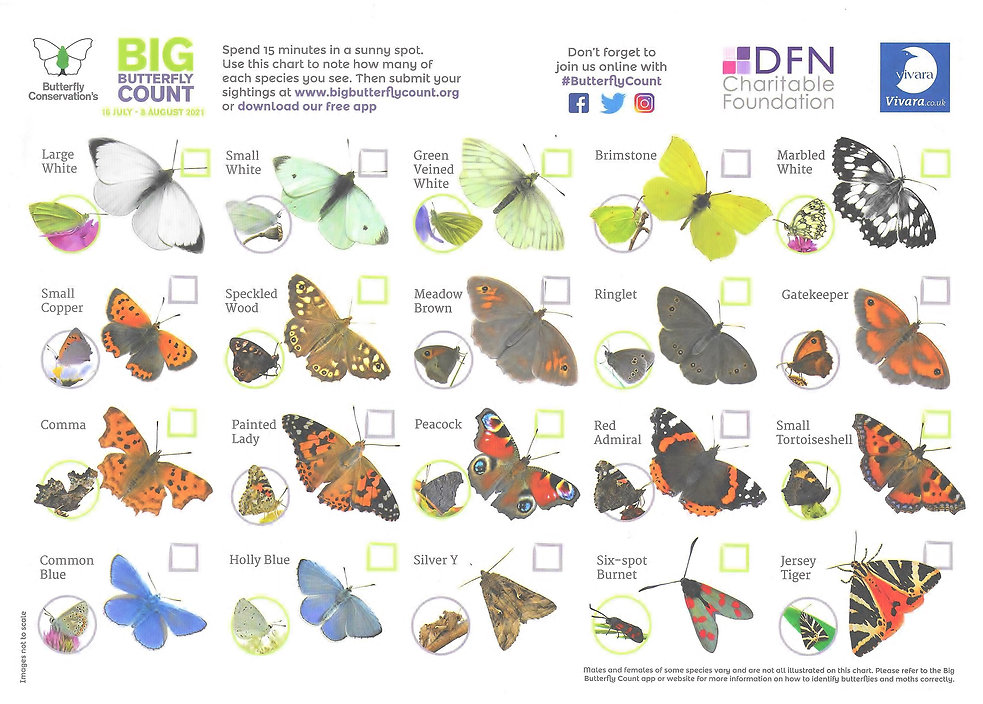 Big Butterfly Count 20210036.jpg