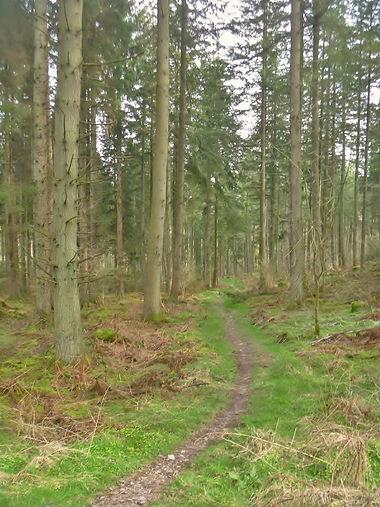 Mabie forest scotland.jpg