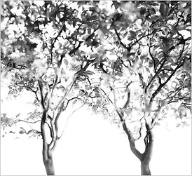 KNIGHT Little Big Tree.jpg