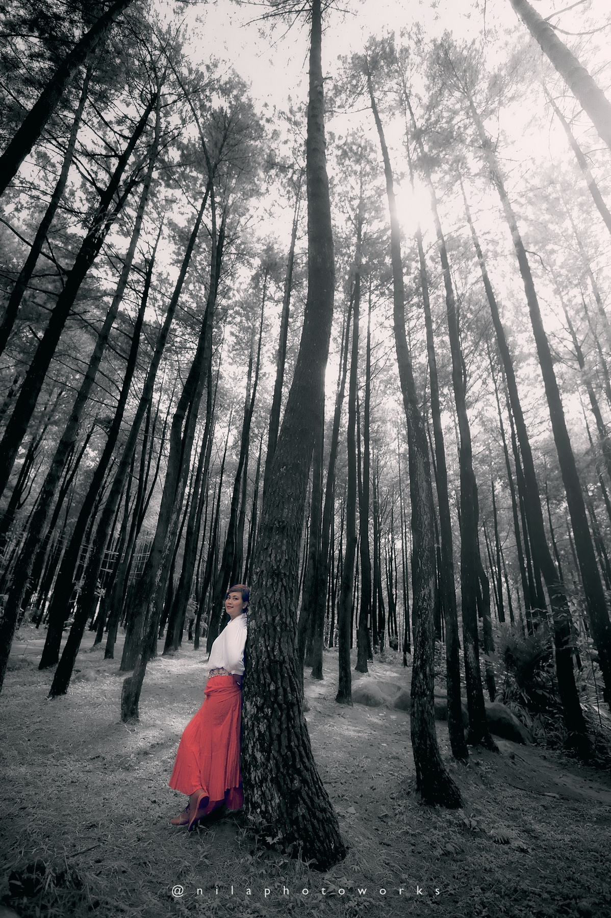 Feel The Breeze Of The Forrest