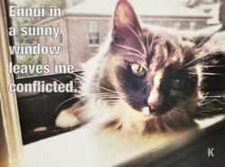 Existential Cat