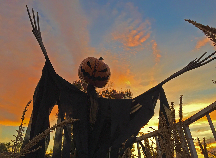 Sleepy Hollow Scarecrow