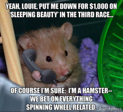 Hamster Bets