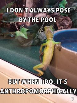 Iguana Get to Know Ya