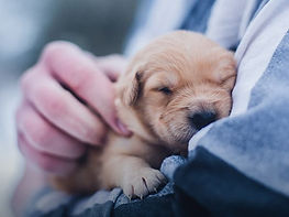 Puppy_Homepage-Thumbnail_600x450px.jpg