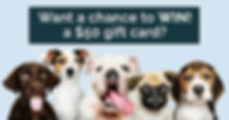 What-can-your-dog-do_Feature-Artwork_120
