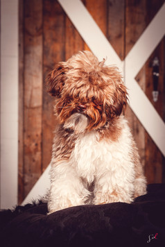 Sol photographie | Animal Expert St-Bruno