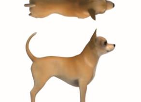 Poids des animaux