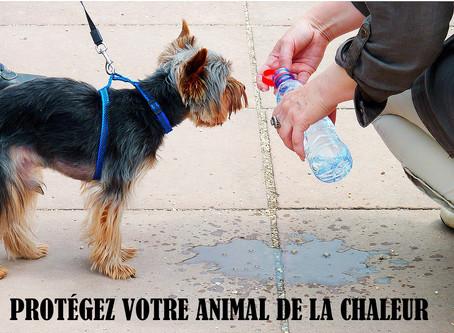 Protégez vos animaux de la chaleur