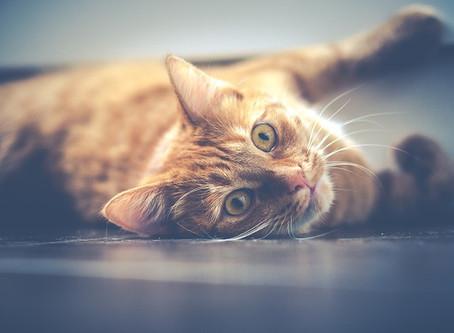 Comment éliminer efficacement les odeurs de litière pour chat ?