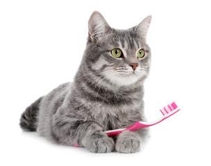 Comment prendre soin des dents de nos chats ?