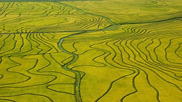 nature_landscape_green_field_river_bird'