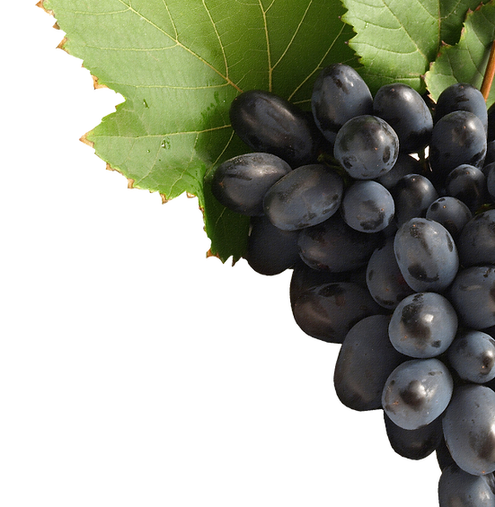 grape_PNG517.png