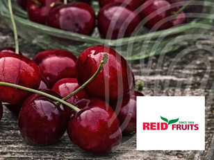 New Partnership with Reid Fruits Cherry Producer