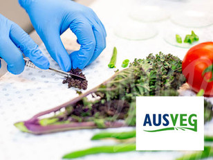 AUSVEG: Supporting the supply chain of Australia's vegetable industry in more ways than one