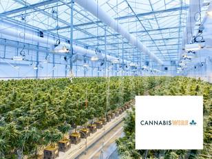 Cannabis Wire: Australian officials urge cannabis advertising compliance