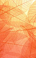 pexels-neosiam-4498792.jpg