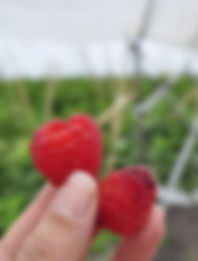 Berries_CP.jpg