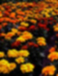 IMG_8061_edited.jpg