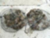あこや貝の稚貝成長用網