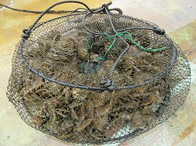 天草の海にいれる際の網