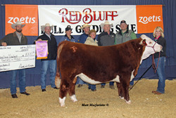 2014 Champion Polled Hereford