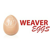 Weaver Eggs.jpeg