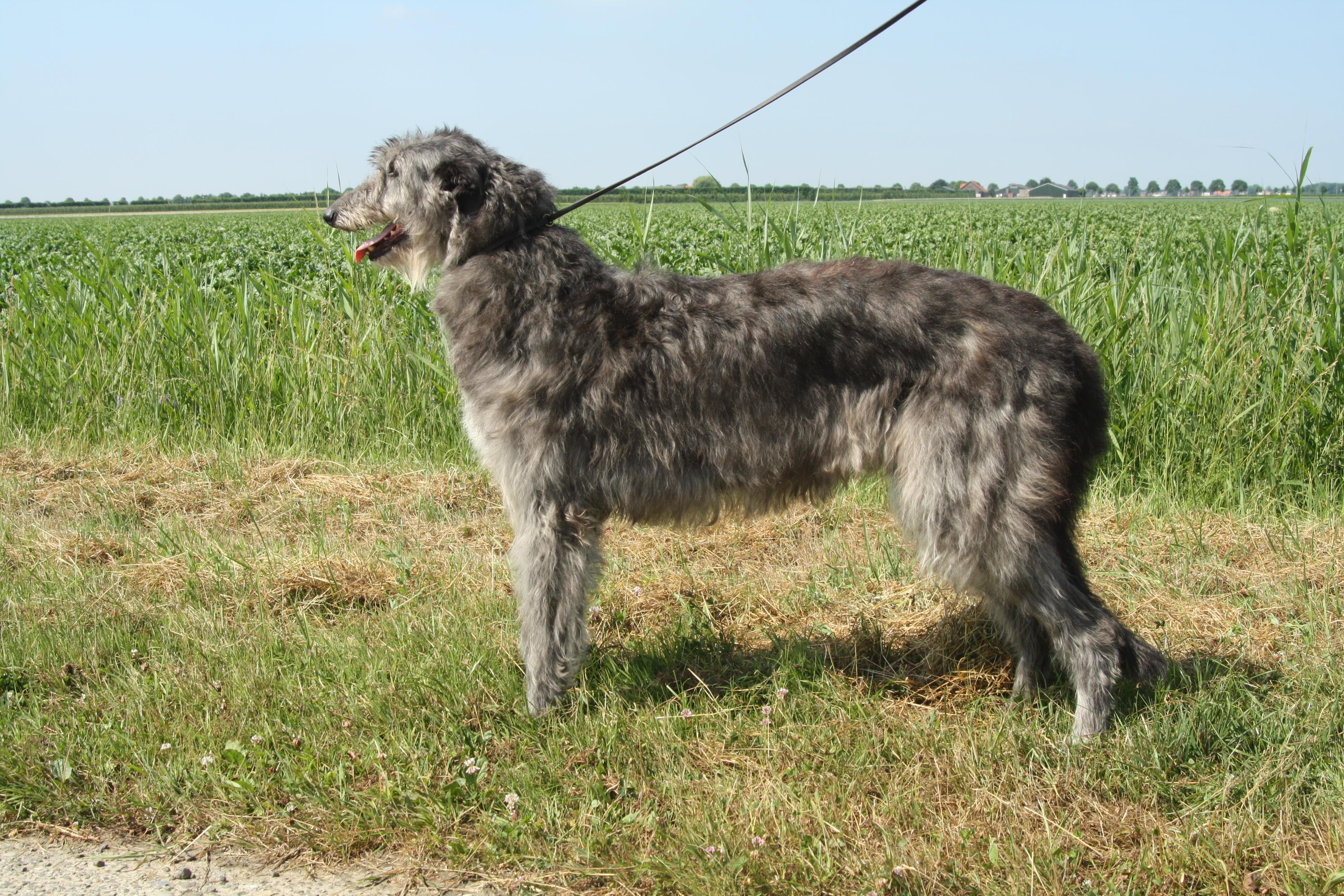 honden marijn_00225