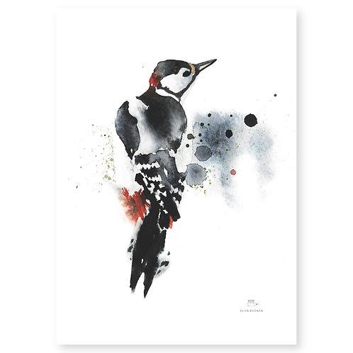 "Ester Visual WOODPECKER print (20"" X 28"")"