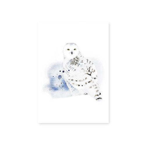 Ester Visual Snowy Owl postcard 4 x 6