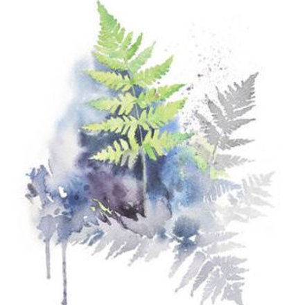 Ester Visual Wood Fern postcard 4 x 6